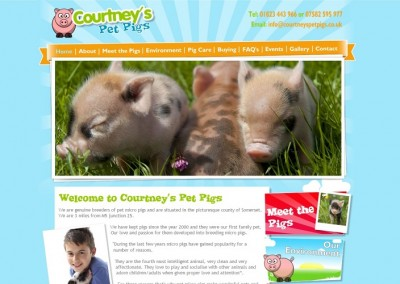Courtney's Pet Pigs
